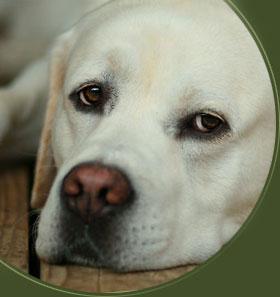 Labradorzucht Vom Hartsfeld Labradorwelpen Baden Wurttemberg
